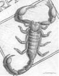 Scorpion06